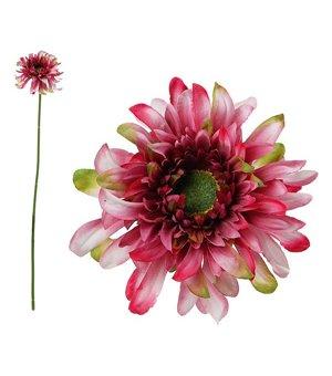 Dekorative Blume Chrysantheme 114530
