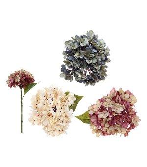 Dekorative Blume Hortensie 114783