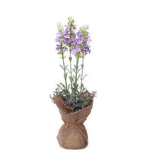 Dekorationspflanze 119596 (37 cm)