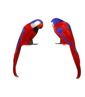 Papagei Pirat Bunt